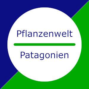 Patagonien: Pflanzen
