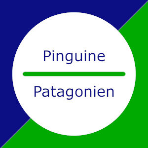 Pinguine in Patagonien