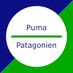 Puma in Patagonien